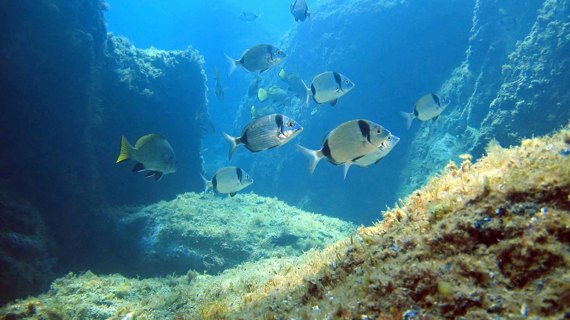 La Costa Brava Un Petit Paradis Pour La Plongée Sous Marine